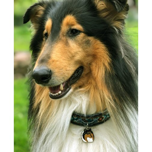 Custom personalized dog name tag COLLIE TRICOLOR Color: colored/silver  Dim: 30 x 34 mm Engraving area:  20 x 18 mm Metal, chrome plated pet tag.   Personalized laser engraving on the back side included.  Hand made  MADE IN SLOVENIA  In stock.